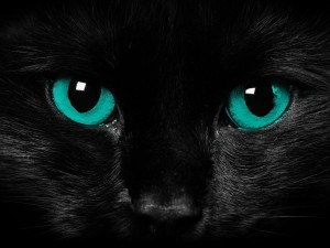 black-cat-bliue-eyes-cat-wallpaper.jpg